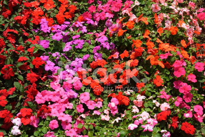 40 beautiful floral textures - photo #34