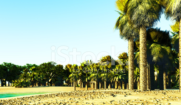 African Oasis Stock Photos Freeimages Com
