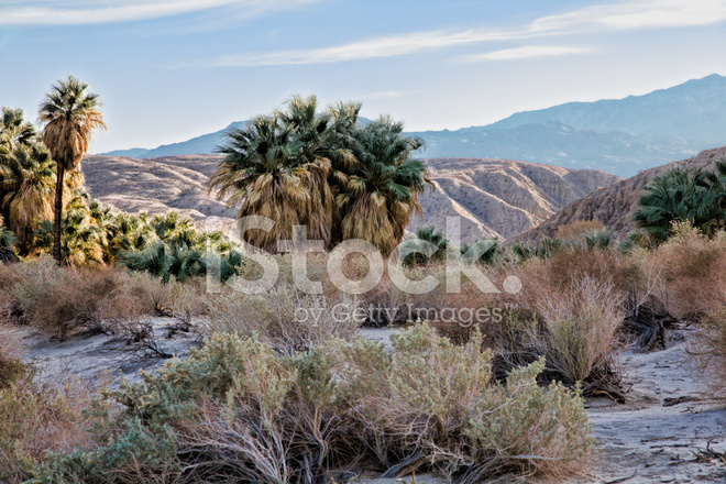 middle eastern singles in thousand palms An estimated 60% of all date palms are grown in the middle east and north africa growing dates and date palms in recent years, date palms have become extremely popular as landscape specimens in subtropical areas across the globe.