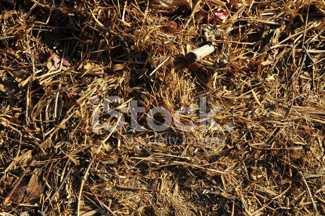 Brown Dry Grass Herb Texture Stock Photos - FreeImages com