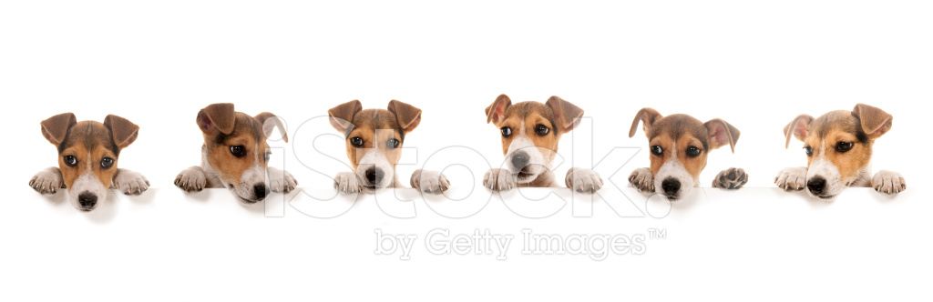 Dogs Above Banner Stock Photos Freeimages Com