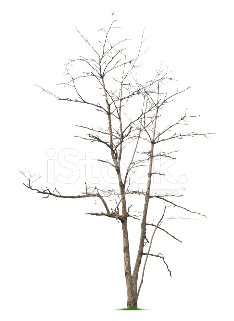 Arbre sans feuilles photos - Arbres sans feuilles ...