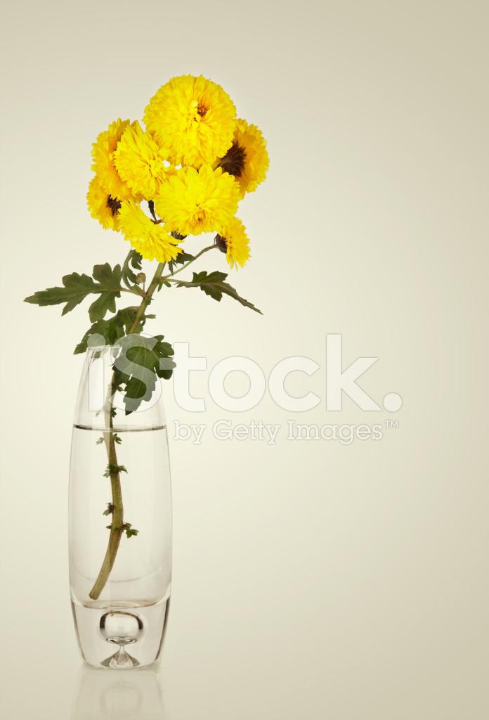 Beautiful Fresh Yellow Chrysanthemum In Vase Stock Photos