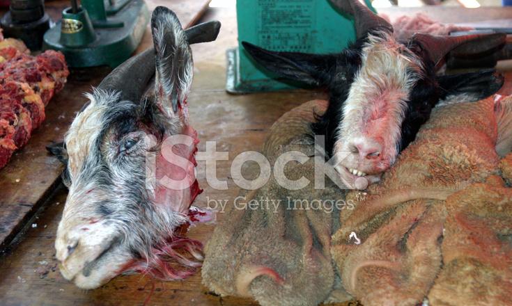 Goats Head Stock Photos - FreeImages com