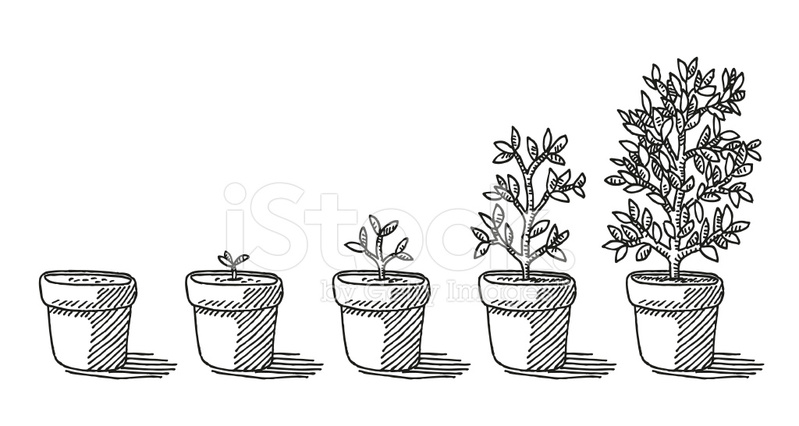Potted Plant Growing Timelapse Drawing Stock Vector