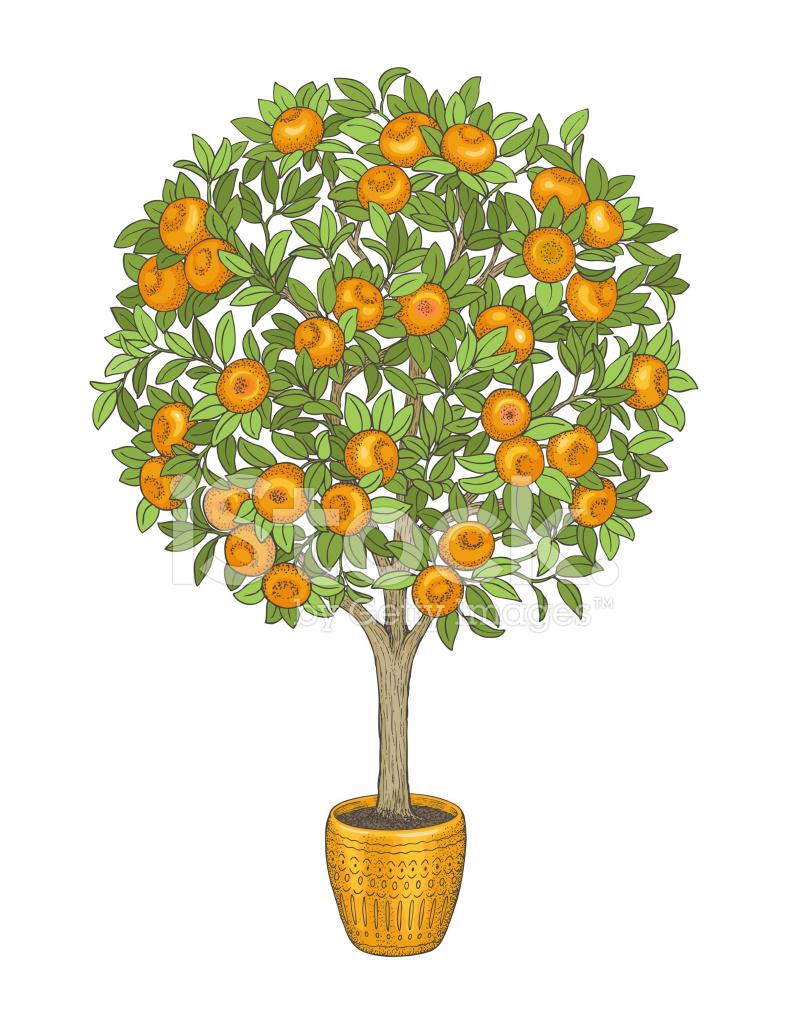 Мандариновое дерево рисунки