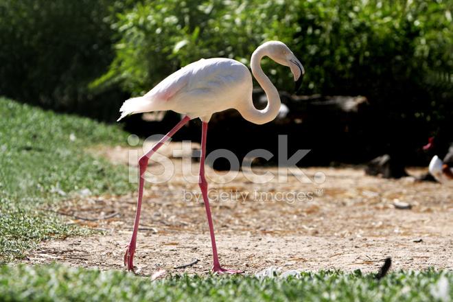 semka-vchera-kazino-rozoviy-flamingo
