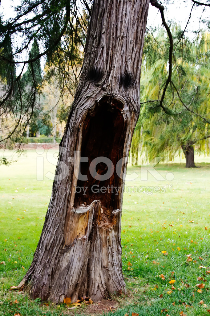 aspect scary tree stock photos freeimages com Red Arrow Clip Art Snow Tree Branch Clip Art