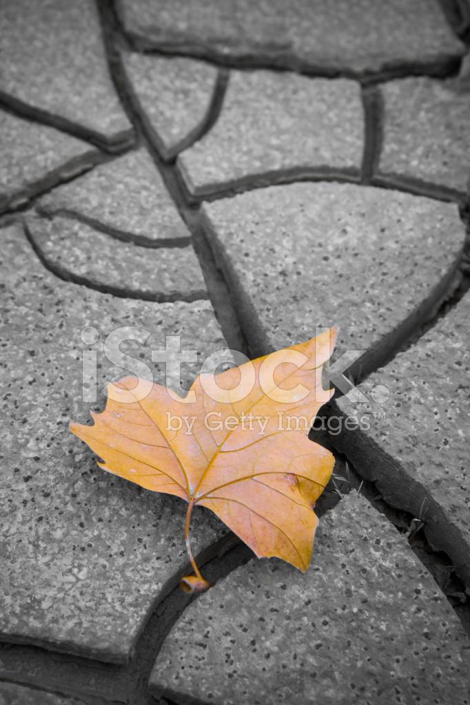 Isolado Folha Seca No Chão Fotos do acervo - FreeImages.com