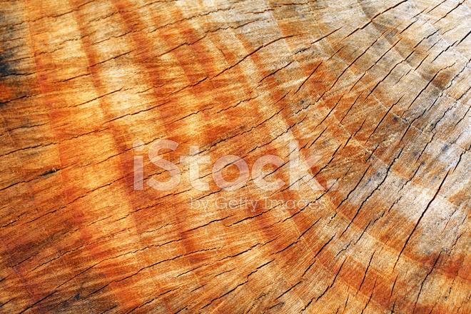 Coupe transversale d 39 un tronc d 39 arbre photos - Coupe transversale d un tronc d arbre ...