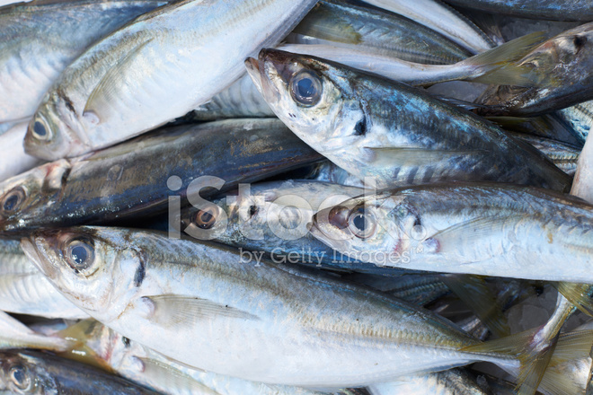 Scad fish for sale on market stock photos for Stock fish for sale