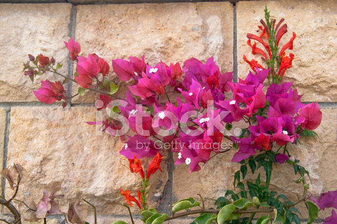 Pink flowers on the bush at summer day stock photos freeimages pink flowers on the bush at summer day mightylinksfo