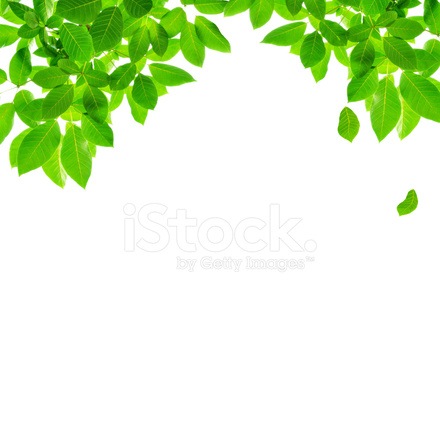 Green Leaf Border Design 2043333 in addition Interior Design Kindergarten Furniture additionally Maison Moderne De Luxe as well Avantages Plafond Suspendu additionally 5 Interesting New Years Eve Celebration Ideas At Home. on home decoration design pictures