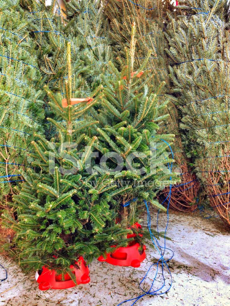 Christmas Trees for Sale Stock Photos - FreeImages.com