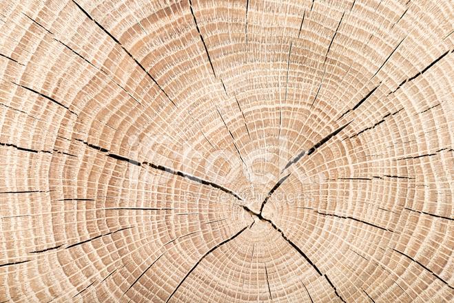 Nettoyer la coupe transversale de tronc d 39 arbre photos - Tronc d arbre coupe ...