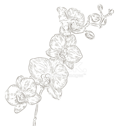 Main Dessin Fleur D Orchidee Stock Vector Freeimages Com