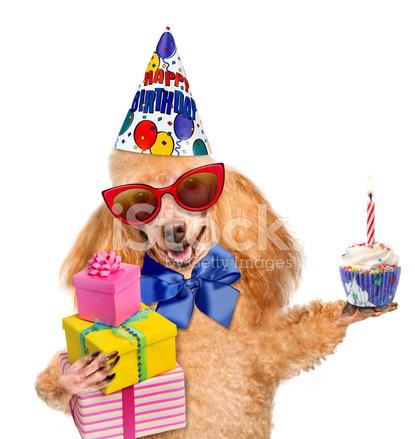 Verjaardag Hond Met Presenteert En Stockfoto S Freeimages Com