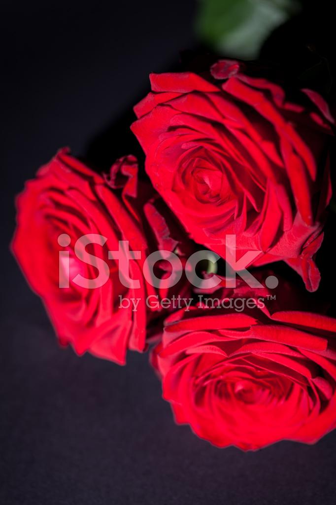 Bellissimo Fiore Rosa Rossa Su Sfondo Nero Fotografie Stock