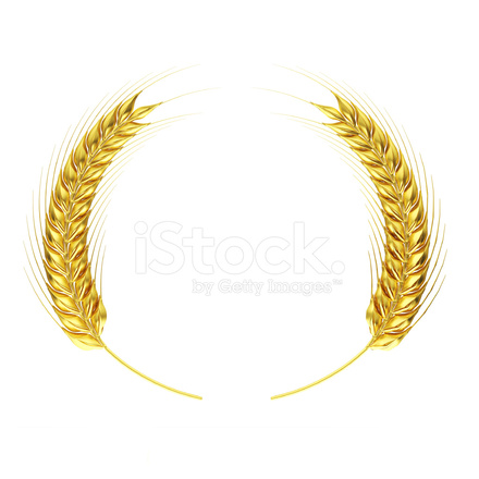 Golden Wheat Circle Stock Photos Freeimages Com