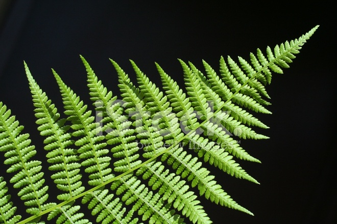 Rhythm Of Nature Fern Frond Stock Photos Freeimages Com