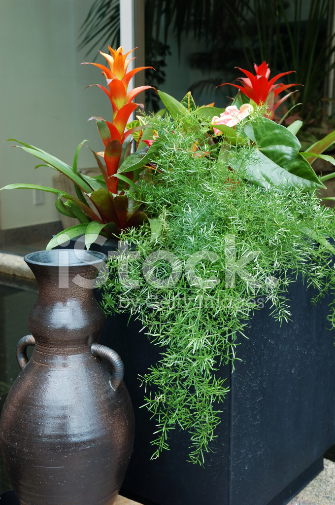 Premium Stock Photo Of Tropical Plants IN Container On Patio