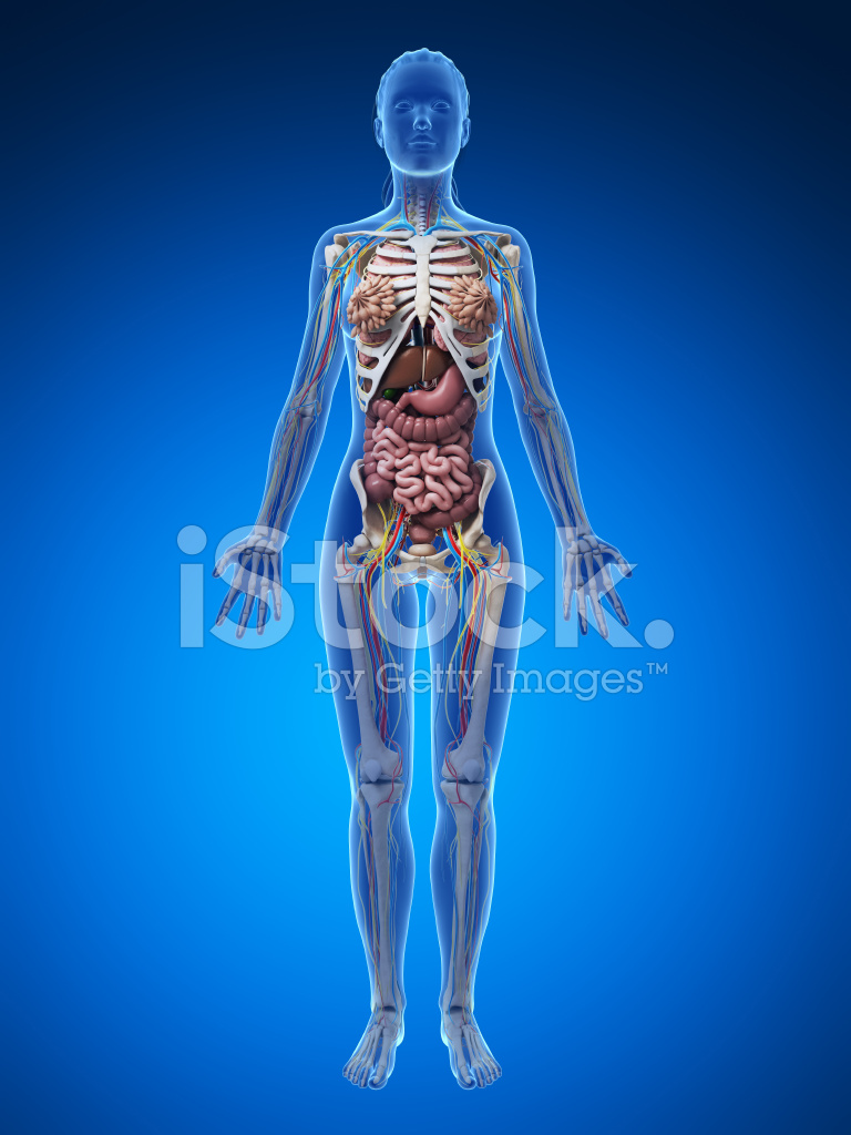 Female Anatomy Full Body Stock Photos - FreeImages.com