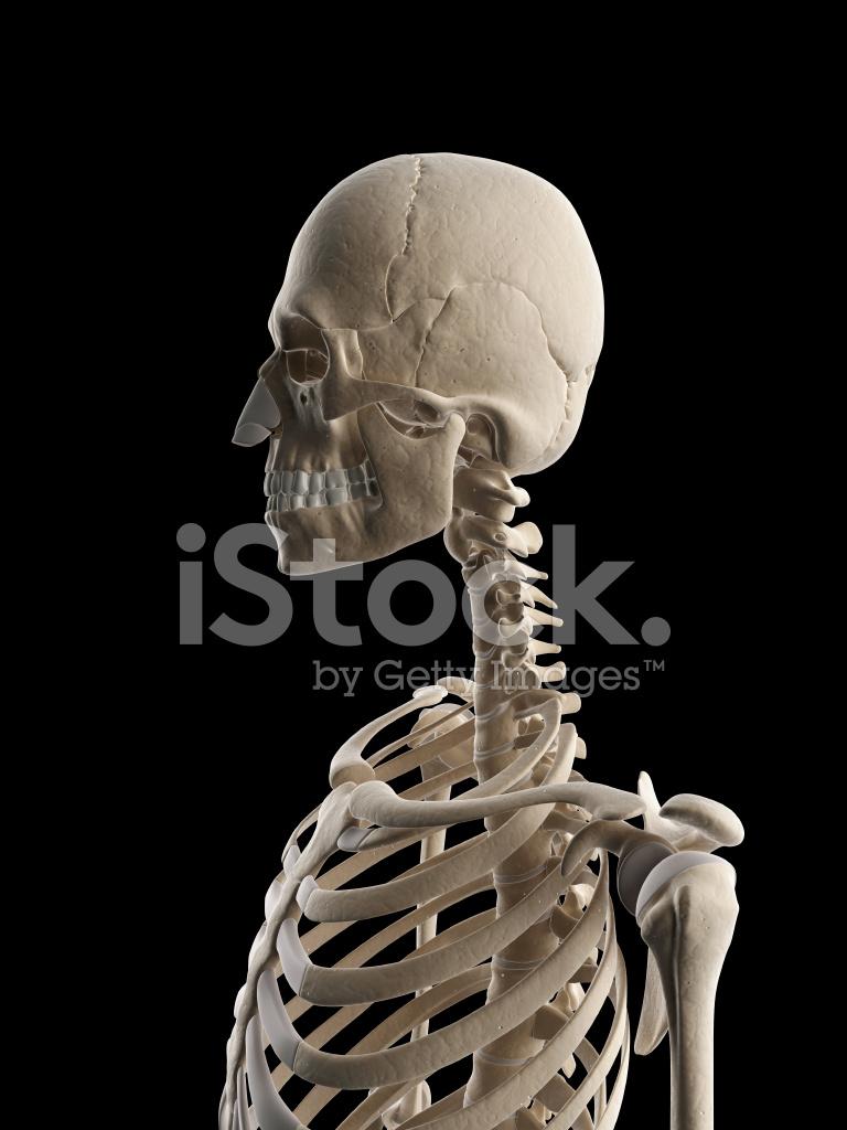 Female Skeleton Neck Stock Photos Freeimages