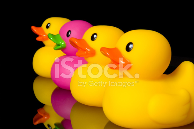 dare to be different rubber ducks on black stock photos freeimages com