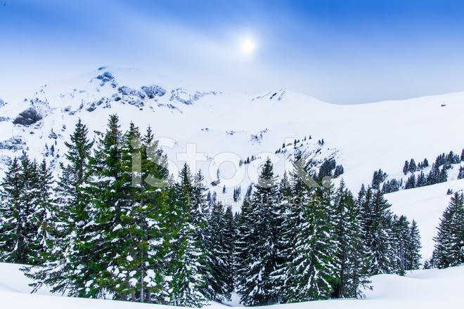 Beautiful Winter Landscape With Snow Covered Trees Stock Photos