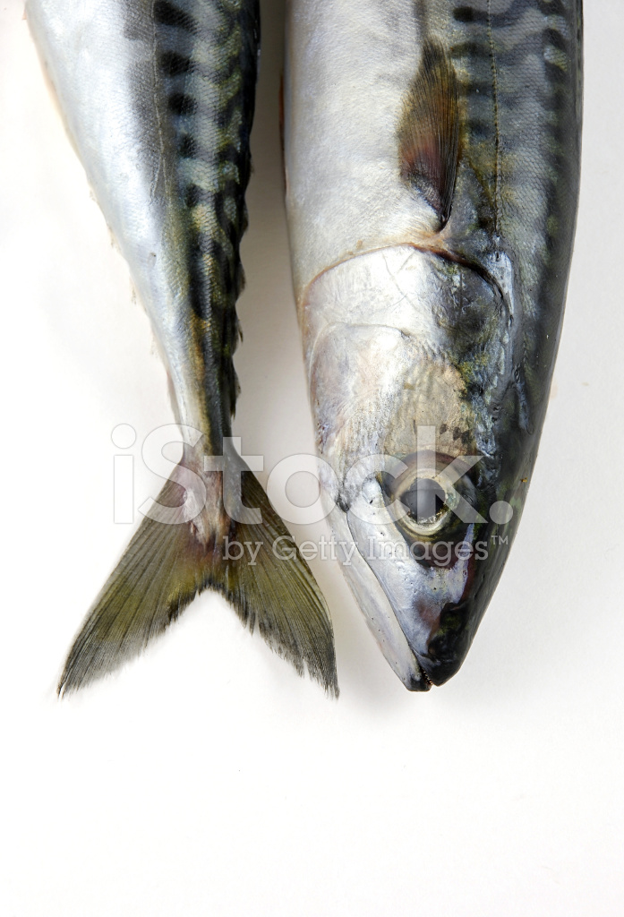 Fish head and tail of two mackerel stock photos for Fish and tails