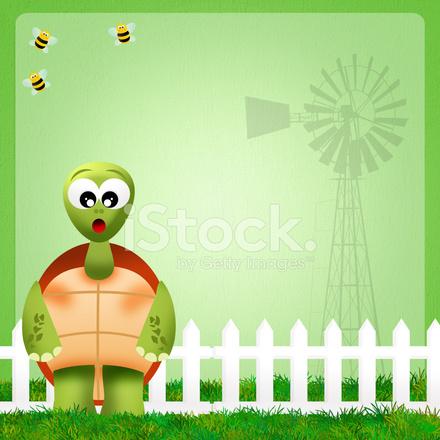 Kaplumbağa çizimi Stock Vector Freeimagescom