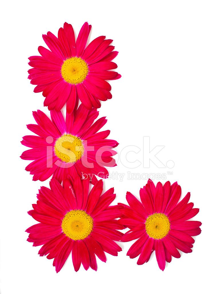 Pink daisy border stock photos freeimages pink daisy border izmirmasajfo