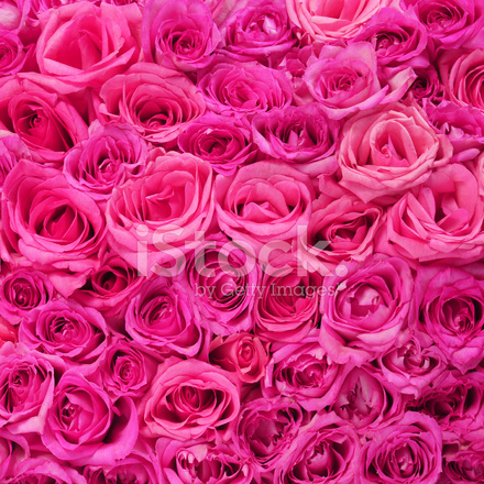Hot pink roses background stock photos freeimages hot pink roses background mightylinksfo