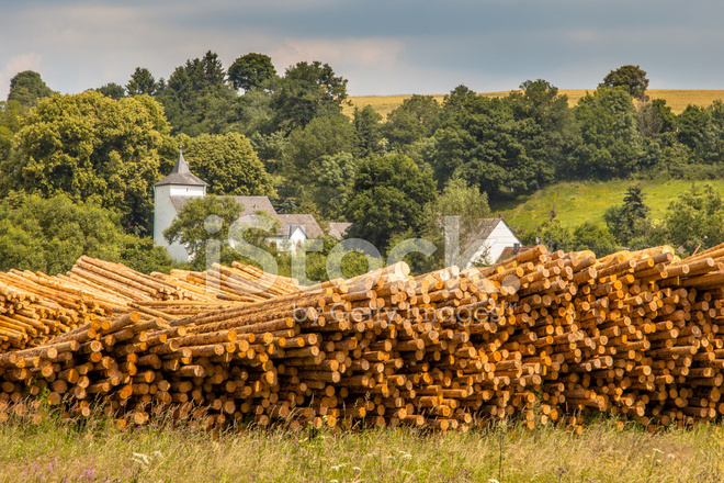 Piles Of Wood Timber Trunks Lumber Yard In Germany Stock