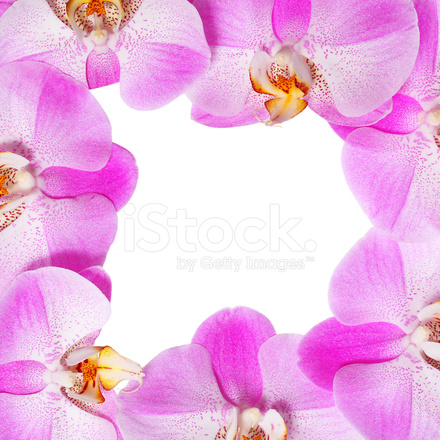 Orchid Flowers Frame Beautiful Hot Pink Flowers Stock Photos ...