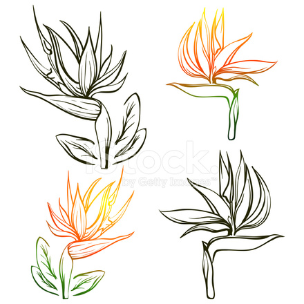 oiseau de paradis exotique fleur tropique stock vector. Black Bedroom Furniture Sets. Home Design Ideas