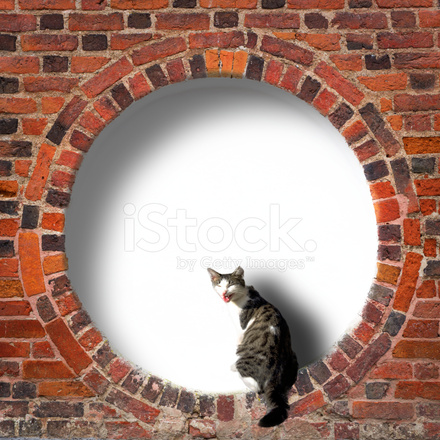 Circular Frame With Cat IN Old Brick Wall Stock Photos - FreeImages.com