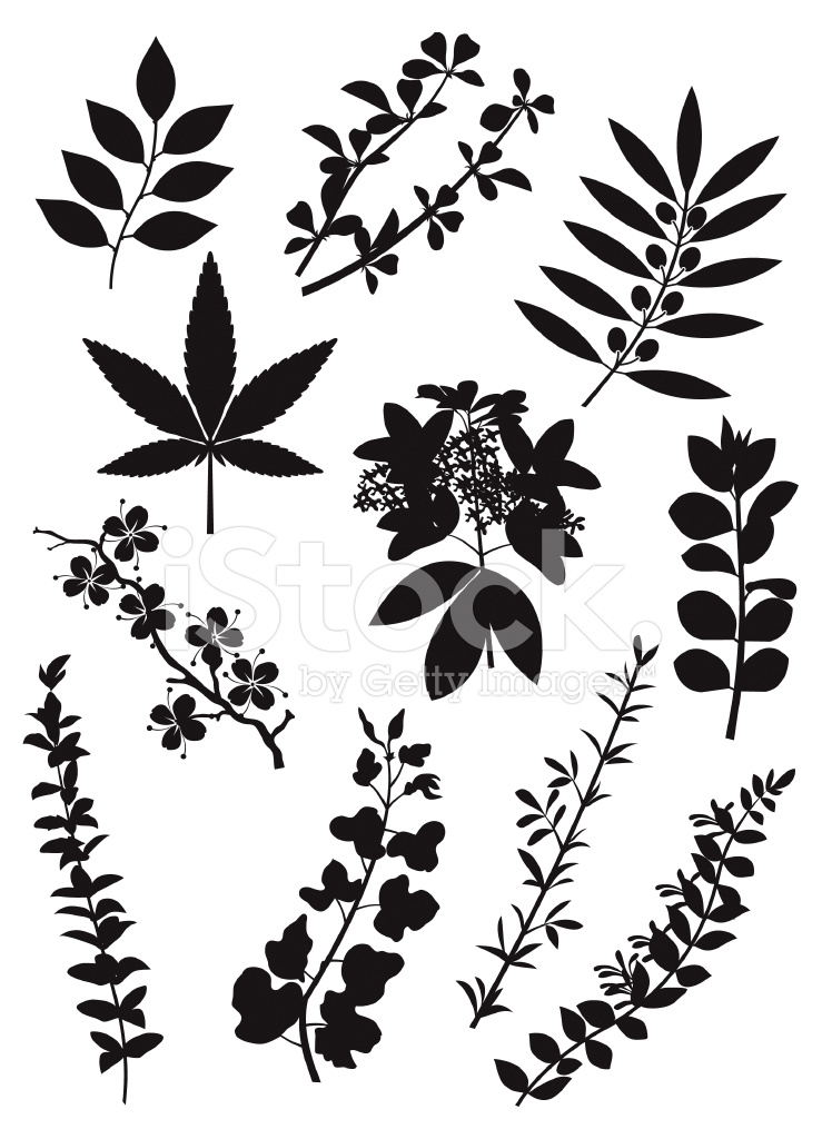 Item 8663 Stairs Down Sign likewise Arthouse Fern Motif Wallpaper In Silver White And Grey 250404 moreover Canvas Textures likewise Wall Decal Vienna Skyline 3585 in addition Clipart Floral Swirl 3. on light green background