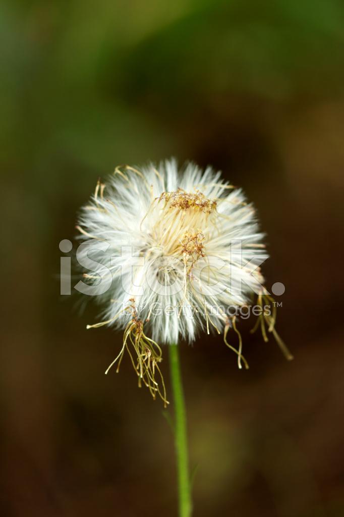 Blancas Flores Silvestres Y Pastos Son Fotografias De Stock