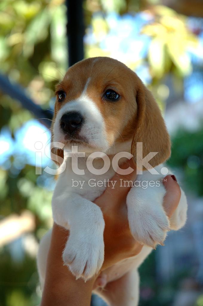 cams euro doggy style