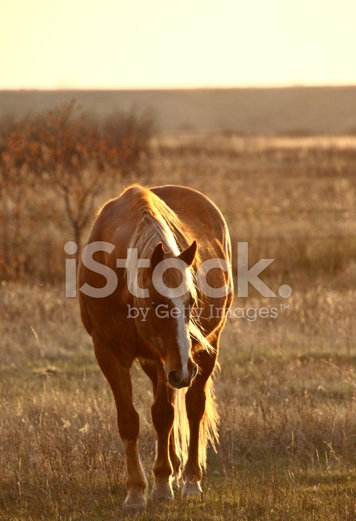 Horse IN Pasture Stock Photos