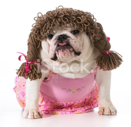 Vrouwelijke Hond Stockfoto S Freeimages Com