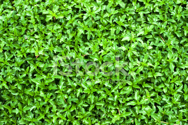 Sfondo Verde Foglia Fotografie Stock Freeimagescom