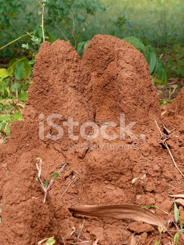 An anthill in the soil stock photos for Soil zoology