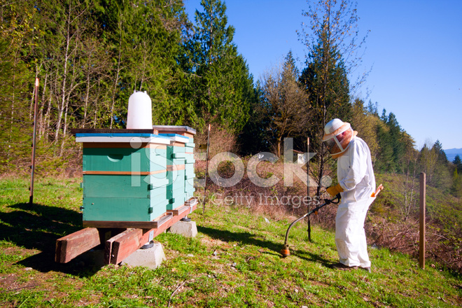 Hives In An Apiary In A Spring Garden. Honey Business