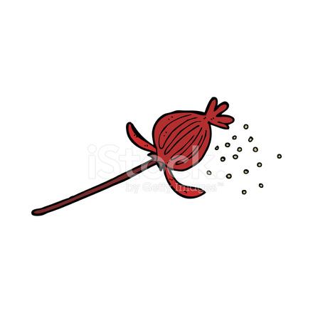 Cartoon Dried Poppy Flower Stock Vector Freeimages