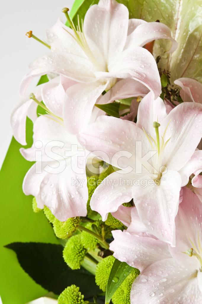 Pale Pink Lilies Stock Photos Freeimages Com