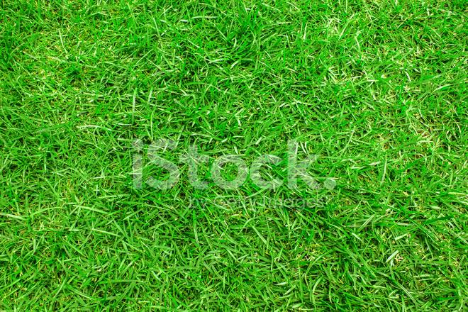 Sfondo Verde Erba Fotografie Stock Freeimagescom
