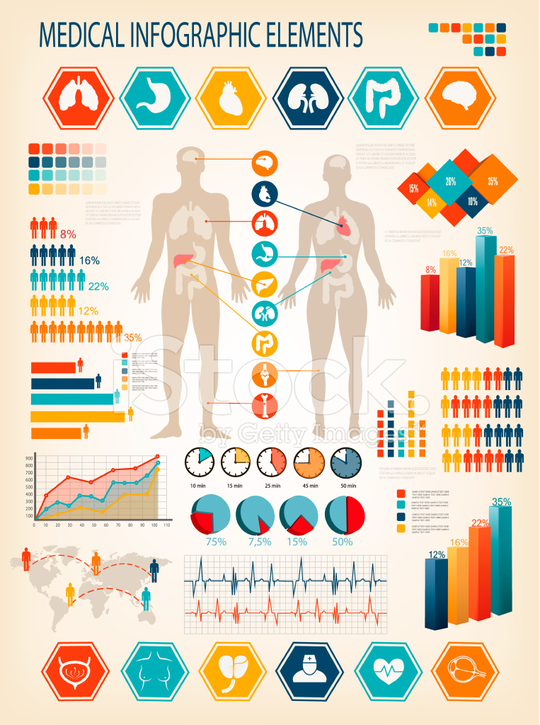 Medical Infographics Human Body With Internal Stock Vector