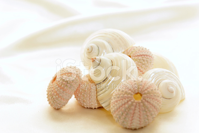 assorted seashells stock photos freeimages
